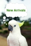 FunTime Birdy New Arrivals