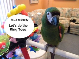 Buddy Teaches your Bird the Ring Toss Trick
