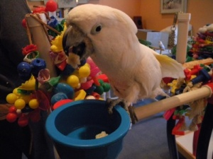 Training your Parrot at an Early Age