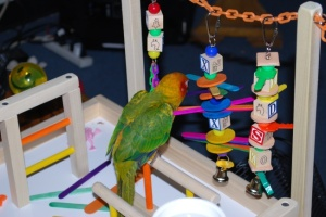 RickyBobby on his Conure Playgym