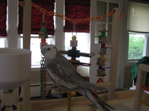 """Don"" loves his new FunTime Birdy Playgym"