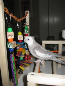 """Don"" the Cockatiel enjoying his FunTime Birdy Playgym"