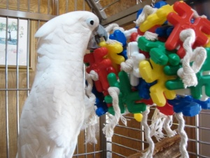 Keeping your Bird Entertained