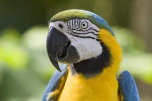 Caring for Elderly Parrots