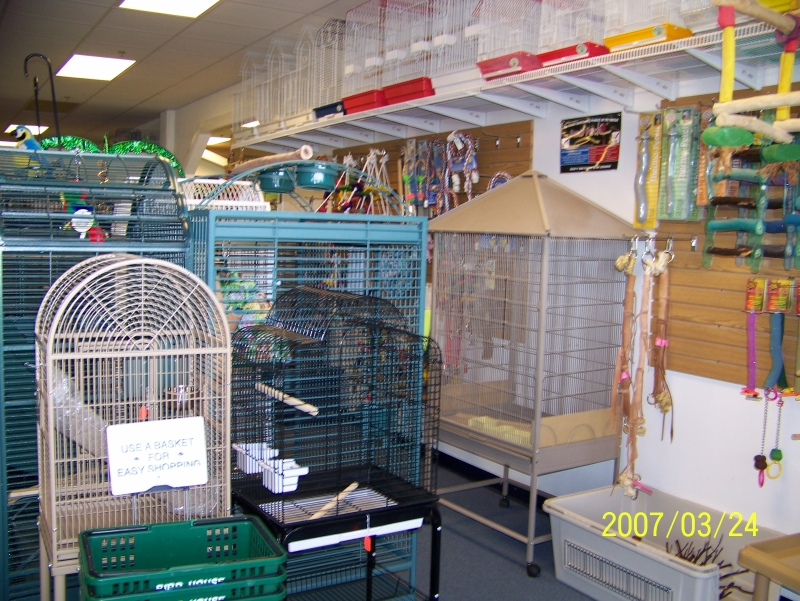 Parrots as Pets For Sale Sale of Parrots May be Banned
