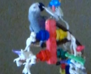 Jasper and the FunTime Birdy Dino Bolt Bird Toy