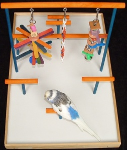 Parakeets as Pets