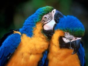 Should I get a Parrot?