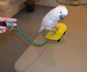 Skateboards for Parrots
