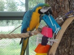 Last Straw Macaw Toy
