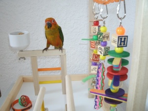 Mango on his FunTime Birdy Playgym