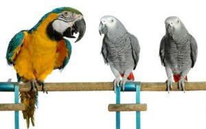 Species Specific Parrot Diets
