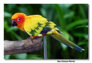 The Beautiful Sun Conure