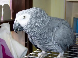 What Kind of Parrot is Best for Me?