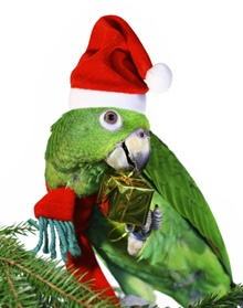 Holiday Gifts for your Birds