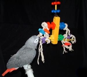 African Grey Bird Toys