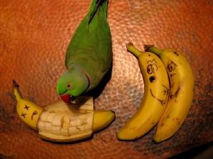 Parrot Comfort Foods