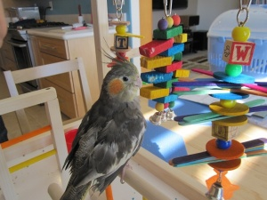 FunTime Birdy Playgym