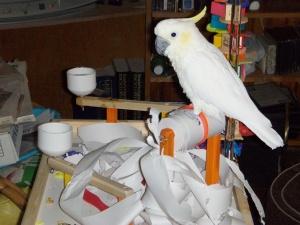 FunTime Birdy FunStation Playgym