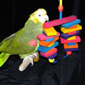 Sheena of the Jungle Bird Toy