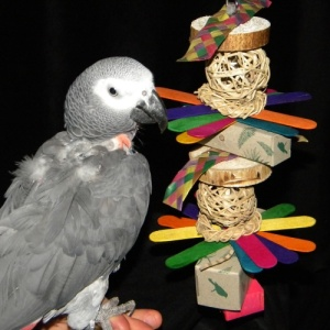 Amazon Parrot Bird Toys
