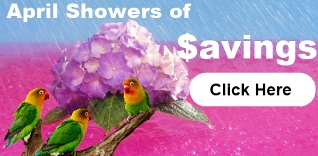 April Showers of Savings Sale