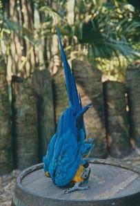 Parrot Yoga Picture