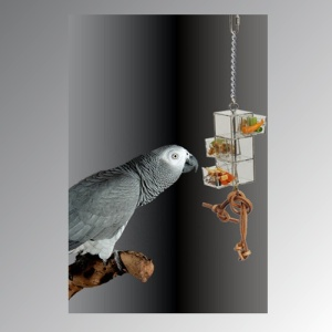 3 Sliding Drawer Foraging Bird Toy