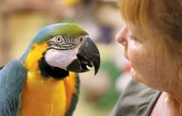 Annual Vet Checks for your pet Parrot