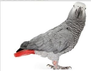5 Common Myths about Parrots
