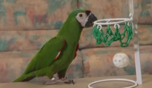 Fun Games to Play with your Parrot