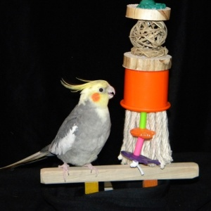 Silly Willy Bird Toy for Cockatiels and Conures