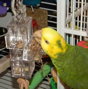 3 Sliding Drawer Foraging Bird Toy by Caitec