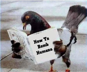Pigeon 101