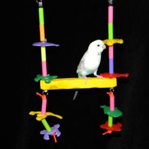 Parakeet Swing