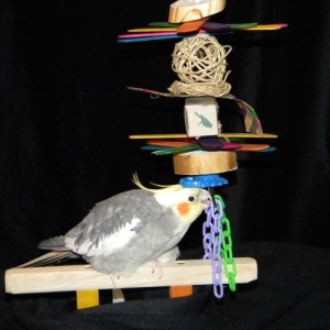 Shredville Bird Toy