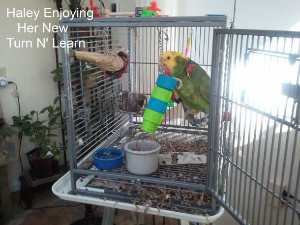 You foraging toys for parrots remarkable phrase