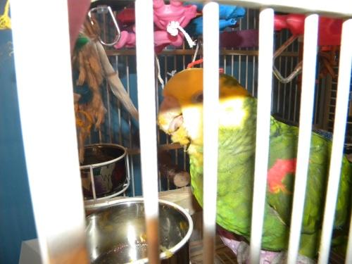 Kiwi eating Squash