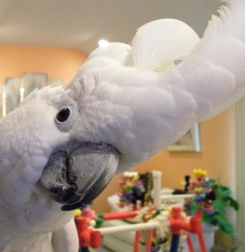 Healthy Beak of a Parrot