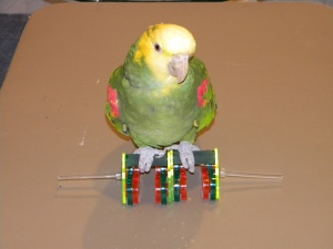 Kiwi on Bird Roller Skates