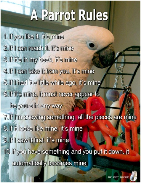 bird humor funtime birdy parrot lovers blog