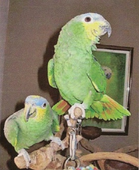feathered Friends Parrot Adoption