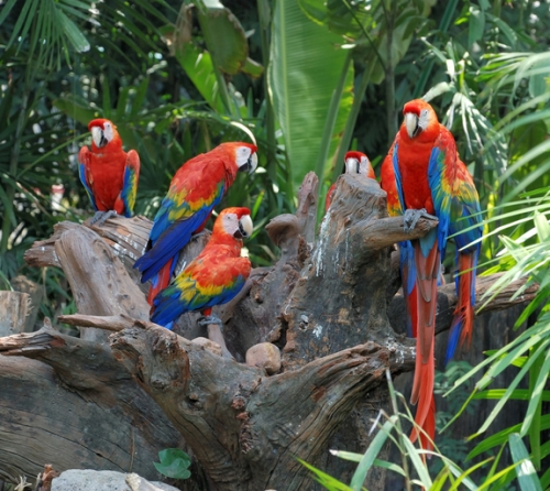 colorful-parrots