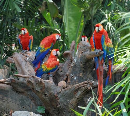colorful-parrots