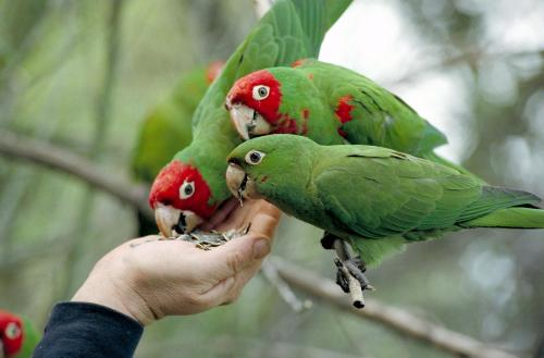 parrots_and_hand2