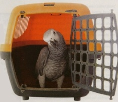 Safe Travels for your Parrot