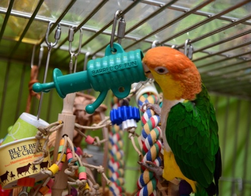 Barrel of Fun Bird Toy
