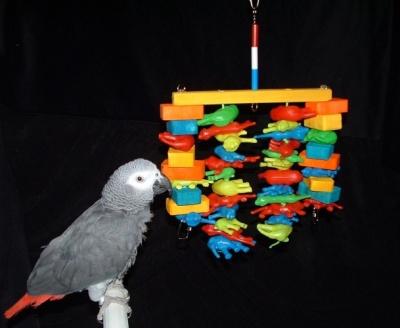 Surfin Safari Bird Toy