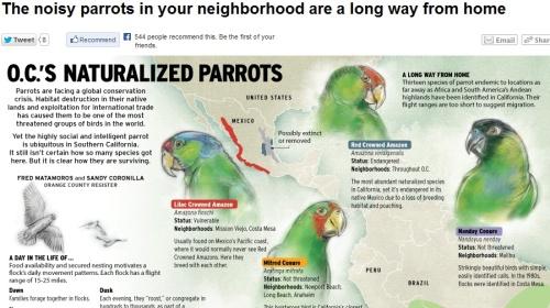 OC Parrots