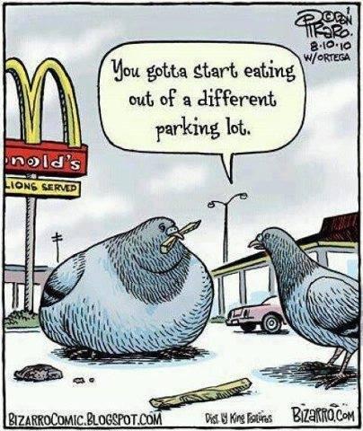 Parrot Cmic